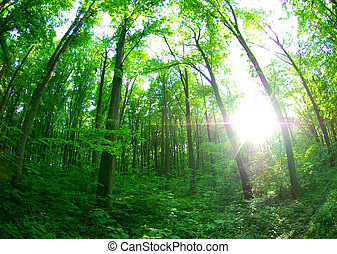 green forest background in sunny day