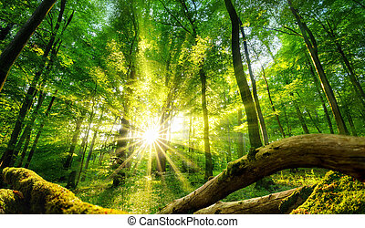 Green forest enchanted by the sun