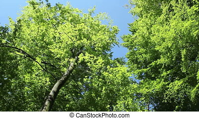 Green forest - Green trees in springtime