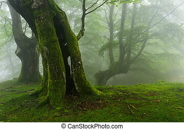 Green forest in Belaustegui, Gorbea Natural park