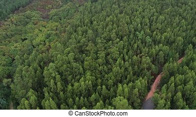 green forest in cloudy weather top view shooting from a drone