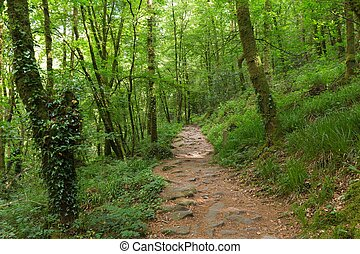 Green forest in France