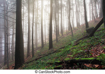 Green Forest in mist