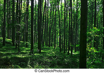 green forest in summer