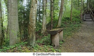 Green forest in Switzerland. A small wooden bench in the Swiss forest.