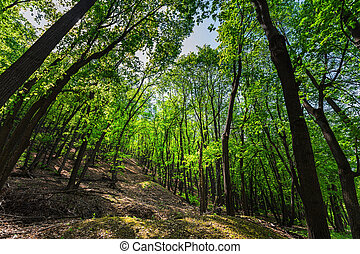Green forest in the spring