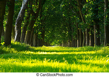 green forest lane