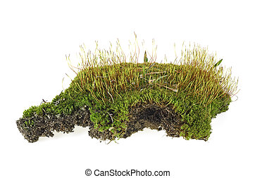 Green forest moss with grass isolated on a white background