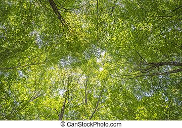 Green forest of Haliburton, Ontario