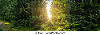 Green forest panorama scenery with sunlight