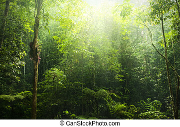 Green forest. - Green forest with ray of light.
