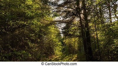 Green Forest. Pine Trees Fairy Forest. Trees pattern. Camera...