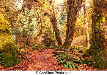 Green forest - Rain forest with dense vegetation