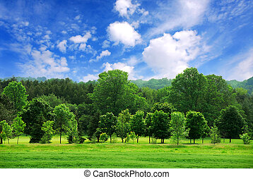 Green forest - Summer landscape of young green forest with ...