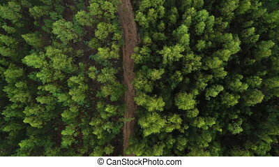 green forest top view shooting from a drone