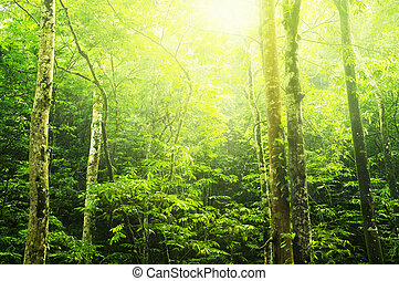 Green forest - Tropical green forest landscape with ray of...