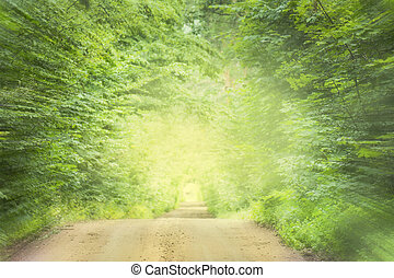 Green forest tunnel of trees with light at the end