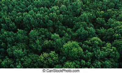 Texture background of great green forest view from above