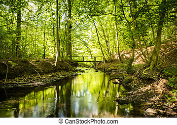 Green forest with a river running through