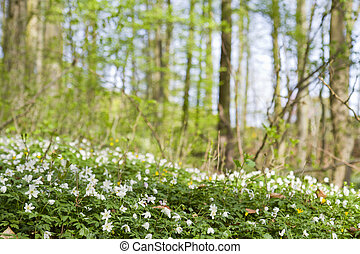 green forest with depth of field in spring