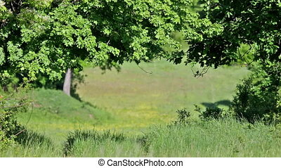 Green forest with oak trees