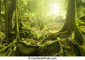 Green forest with ray of light