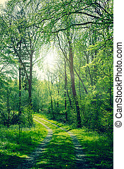 Green forest with sunshine