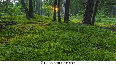 Green forest with warm sunlight hitting the moss, 4k ...