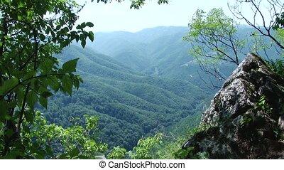 Green Forests Landscape