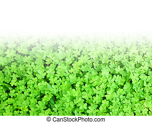 Green fresh clover border