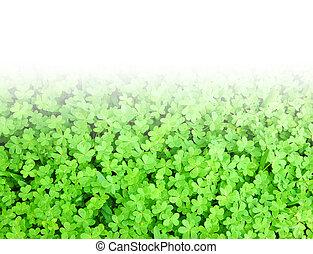 Green fresh clover border