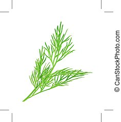 Green fresh dill, isolated on white background