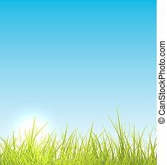 Green fresh grass and blue sky summer background