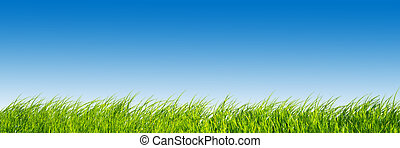 Green fresh grass on blue sky panorama.