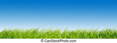 Green fresh grass on blue sky panorama.