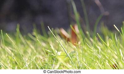Green fresh grass