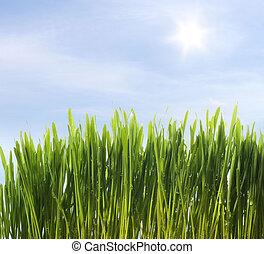 green fresh grass on blue sky background