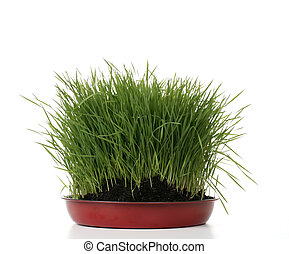 green fresh grass with dirt on white background