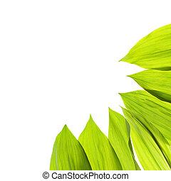 Green fresh leaf isolated background
