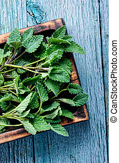 Green fresh melissa leaves