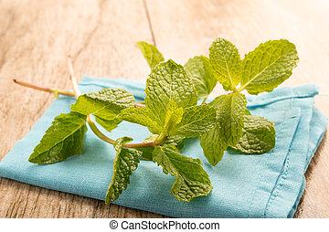 Green fresh mint in a white bowl