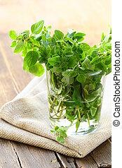 green fresh oregano - herb spice