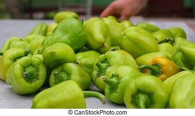 Green fresh pepper