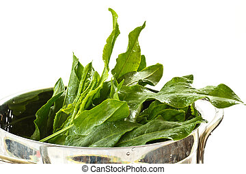 green fresh sorrel with a white background