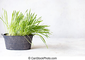 Green fresh sprouted grass in a pot on a white background