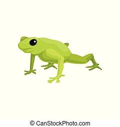 Green frog amphibian animal vector Illustration on a white background