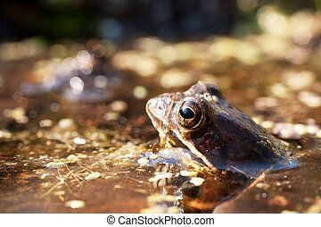 green frog in his pond