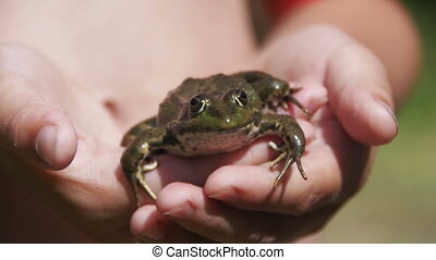 Green Frog in the Hands of a Child on the River Bank. Slow Motion