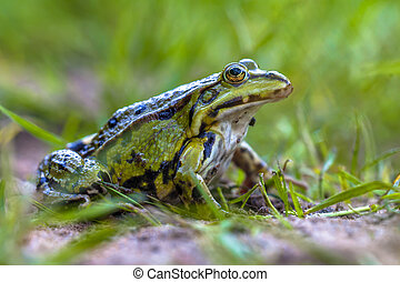 Green frog lawn