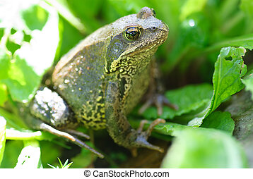 green frog on a grass